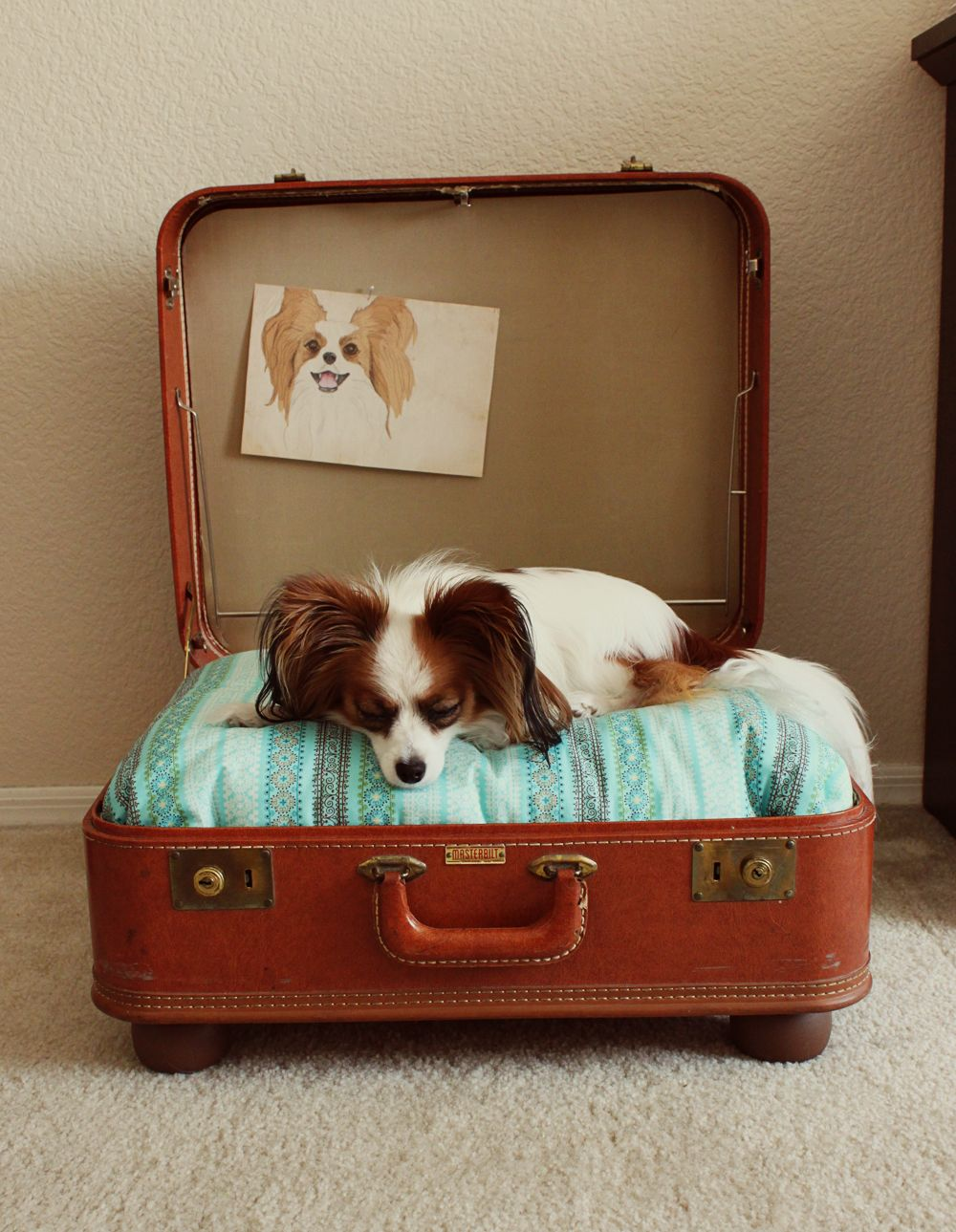 The pet in the suitcase